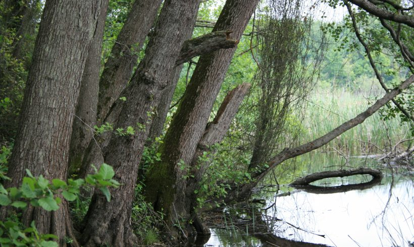 Лонгозни гори Национален Парк Инеада
