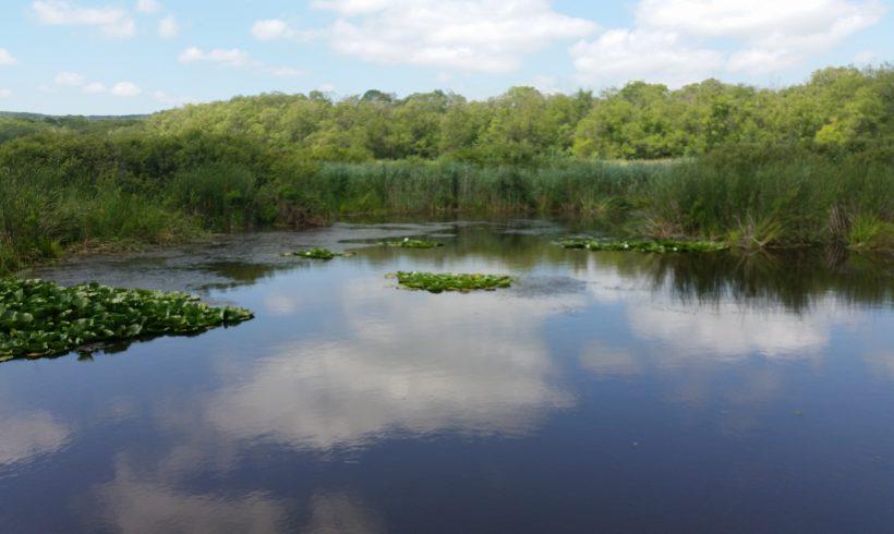 Arkutino swamp