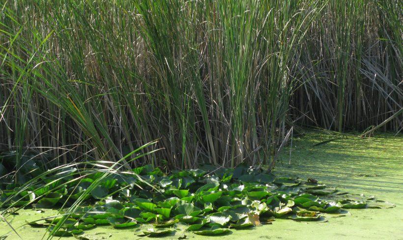 Reserve Velyov Vir (Water lilies)